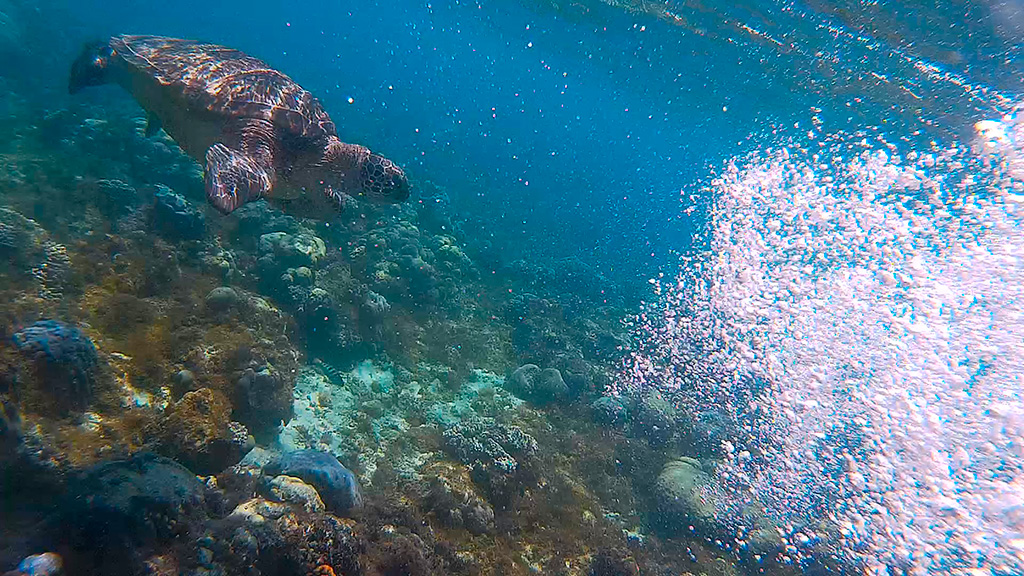 Dumaguete to Apo island, Philippines and Turtles swimming!
