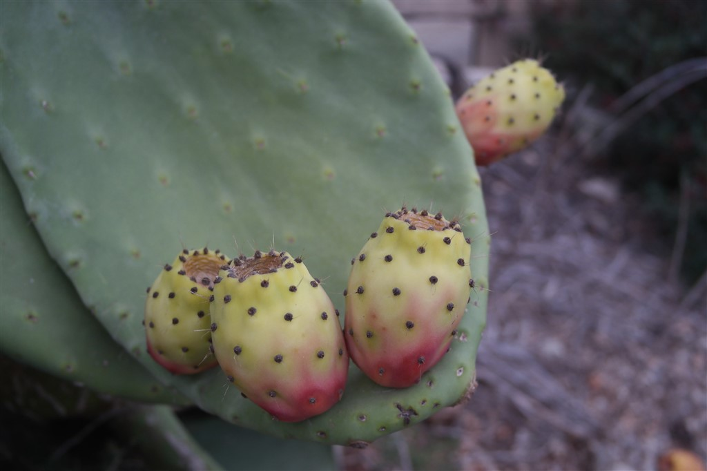The Prickly Pear and Watermelon Maltese Sunset Smoothie