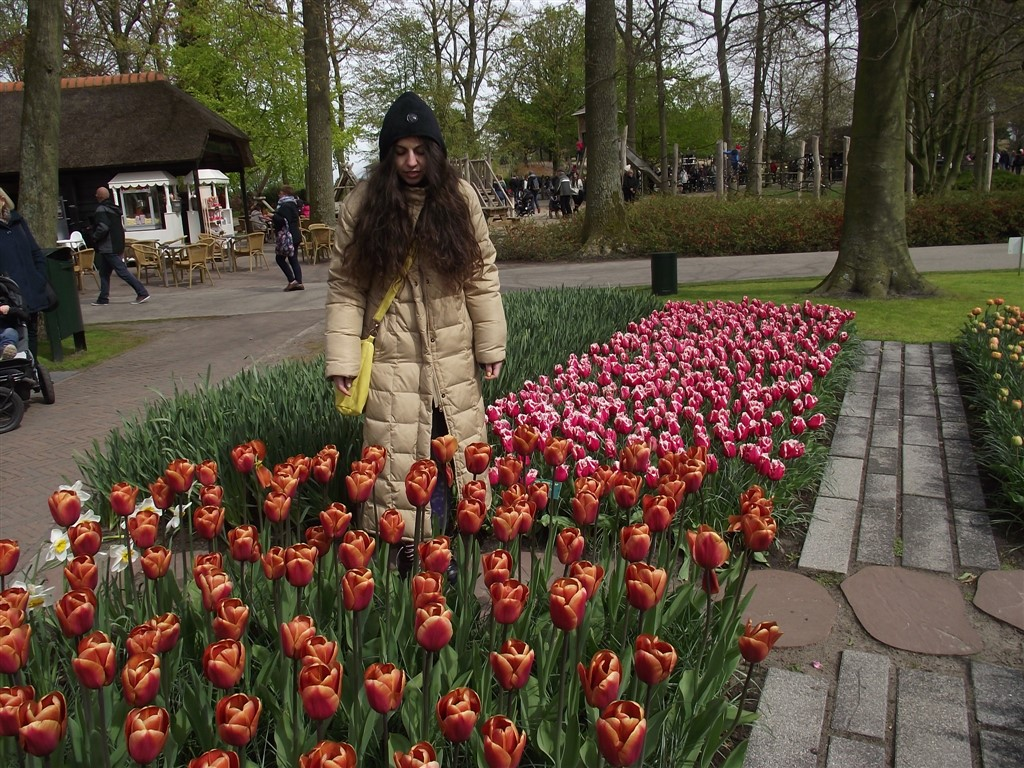 a day in tulips garden Holland