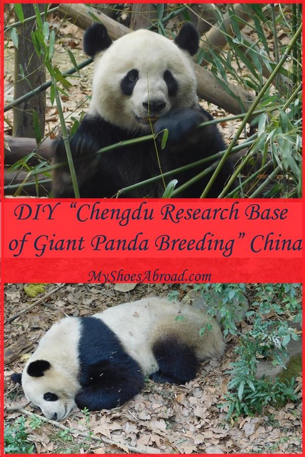 Hot to visit Pandas without a tour