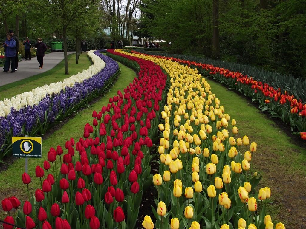 tulip garden holland