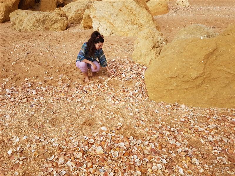 Algarve Shells